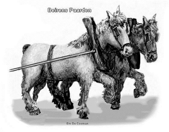 Beirens paarden