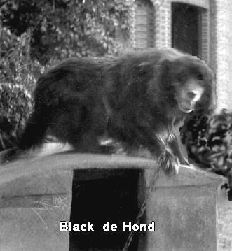 hond Black