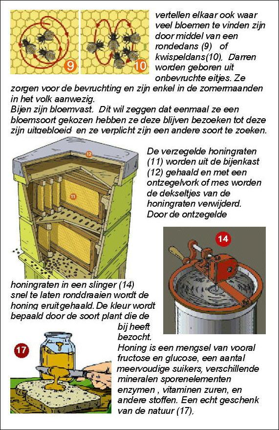 Uitleg over de bij (2)