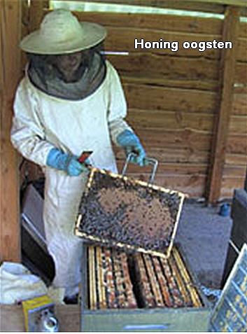 Honing oogsten