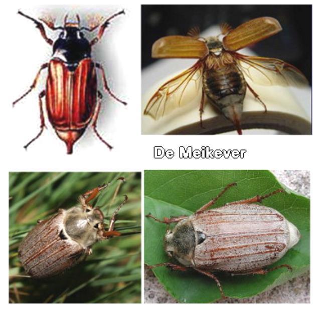 meikevers