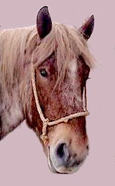 Paardekop